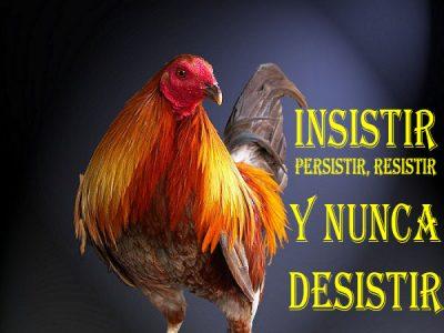 Imagenes De Gallos De Pelea Con Frases