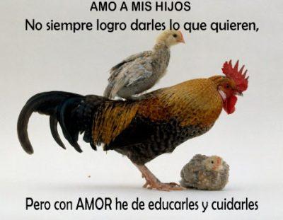 Imagenes De Gallos Con Frases De Amor