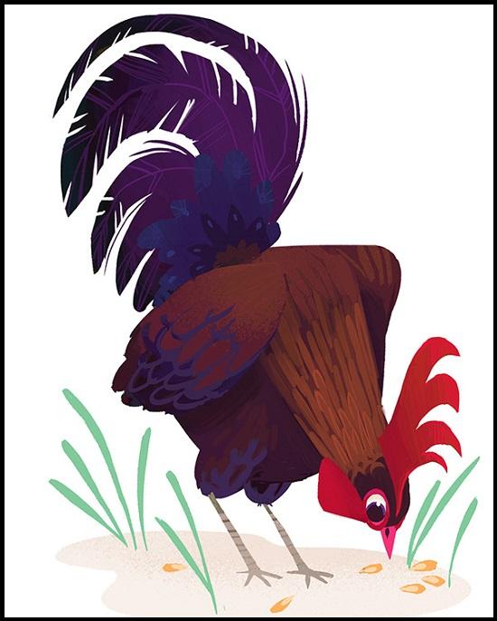 Imagenes De Gallos En Caricatura Para Dibujar  imagenes de gallos
