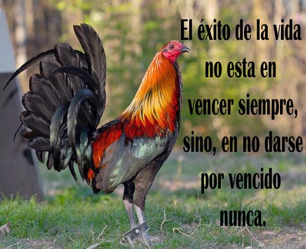 Imagenes de Amor con Frases Bonitas! ♡♥   imagenes