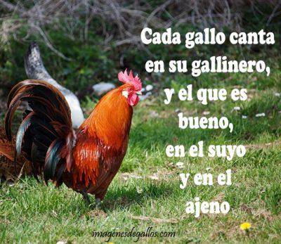 fotos de gallos con frases y dichos de galleros