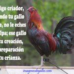 Imagenes De Gallos Con Frases Y Dichos De Galleros