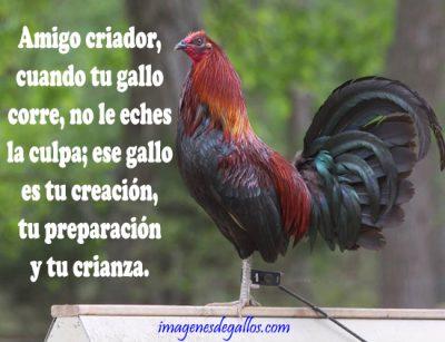 Frases Y Dichos De Galleros