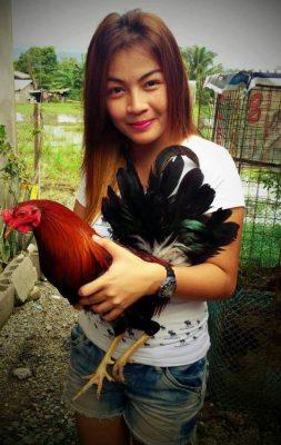 mujeres bella con gallos de pelea