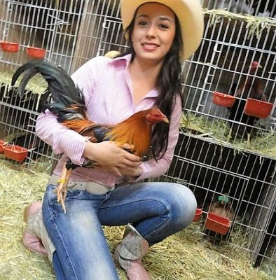 Imagenes De Gallos De Pelea Con Mujeres