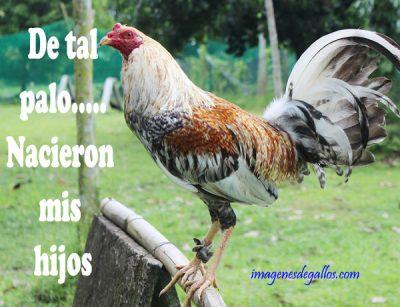 Imagenes De Gallos Con Frases Perronas Para Descargar Gratis