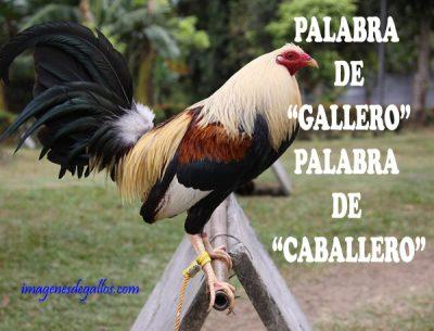 Dichos De Galleros Con Gallos Giros