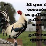 Dichos De Galleros Con Gallos Giros Para Facebook