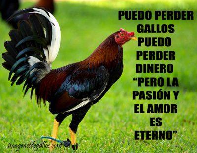 Imagenes De Gallos Finos Con Frases Chidas