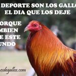 Frases De Galleros Con Fotos De Gallos Finos Para Descargar