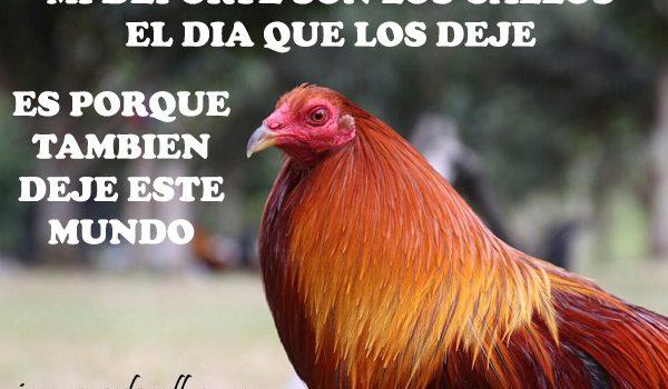Imagenes De Gallos Finos Con Frases De Un Gallero