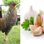 Las 4 Mejores Vitaminas Caseras Para Gallos De Pelea