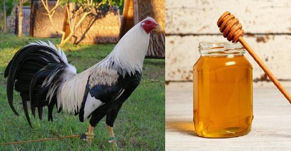 Resultado de imagen para Vitaminas Naturales para los Gallos de Pelea
