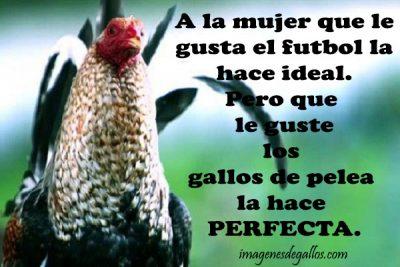 Frases Para Mujeres Galleras Con Gallos De Pelea