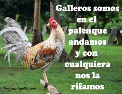 Frases Para Un Buen Gallero