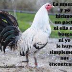 Frases Para Un Buen Gallero Con Gallos Finos