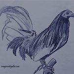 Fotos De Gallos De Pelea A Lapiz Para Descargar