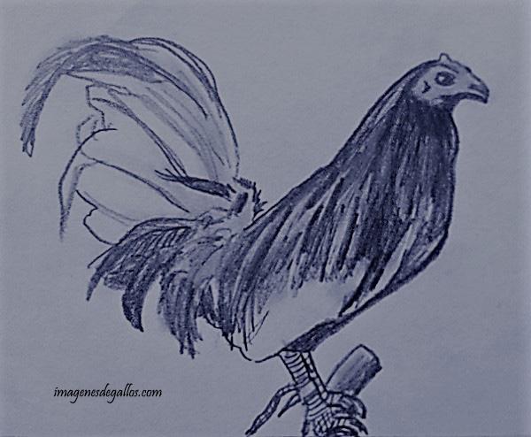 Dibujos Gallos Para Colorear: Imagenes De Gallos Finos Para Colorear Dibujos De Gallos