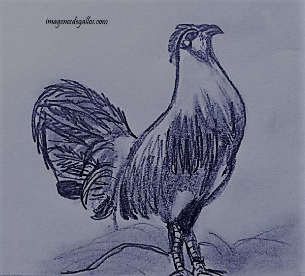 dibujos de gallos de pelea a lapiz  imagenes de gallos