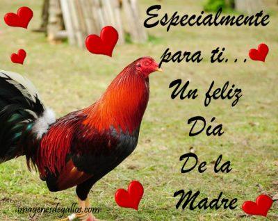 fotos de gallos con frases por el día de la madre