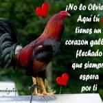 Fotos De Gallos Con Frases De Amor Para Galleros