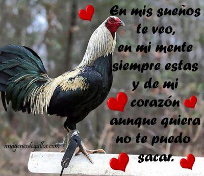 Fotos De Gallos Con Frases De Amor