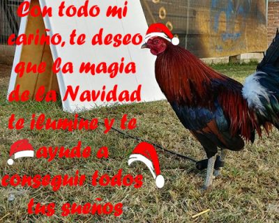 Fotos De Gallos Finos Con Frases De Navidad