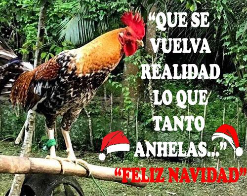 Imagenes De Gallos Navajeros Peruanos Para Descargar